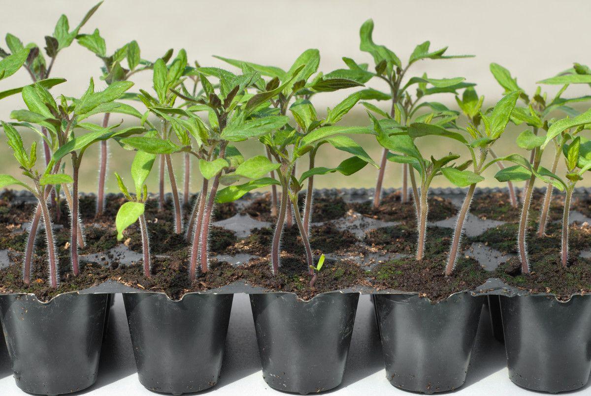 plantas de viveros ecológicos en El Campillo
